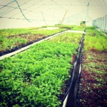 Happy Farming at Baby Greens in North Kingstown, RI